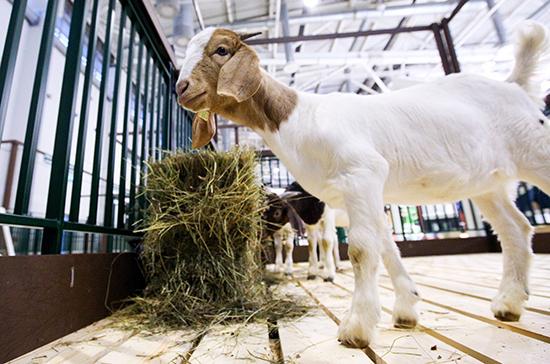 Контроль за госрегистрацией кормовых добавок предлагают отдать Россельхознадзору