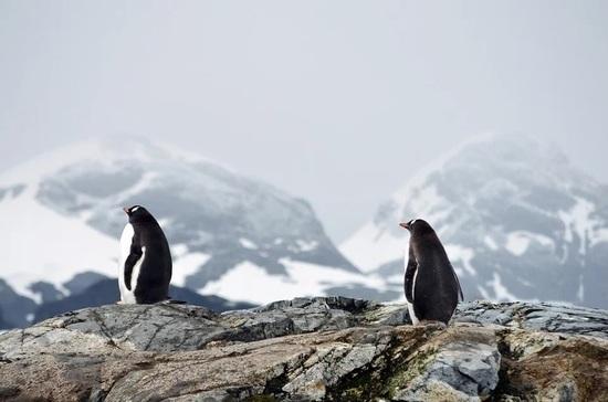 Законопроект о Дне открытия Антарктиды внесли в Госдуму