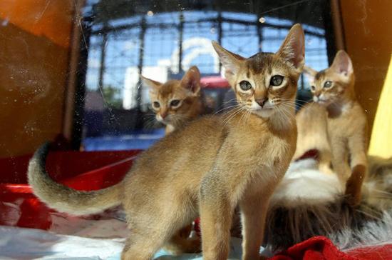 Сколько кошек можно поселить в квартире