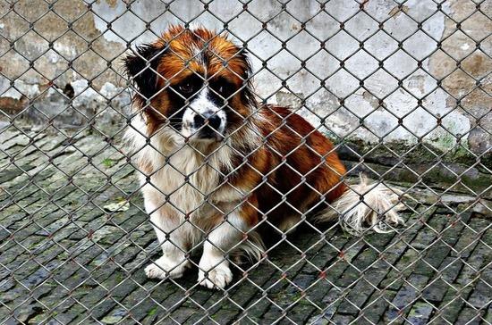 В России хотят ввести правила строительства приютов для животных