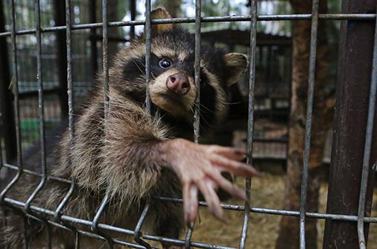 Чиновники смогут изымать животных при проверке зоопарков