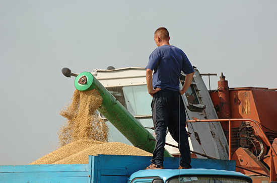 Аграриям компенсируют половину затрат на производство зерна
