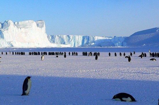 Как назвали Антарктиду открывшие ее русские мореплаватели