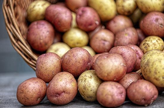 Минсельхоз ожидает коррекцию цен на картофель в июне