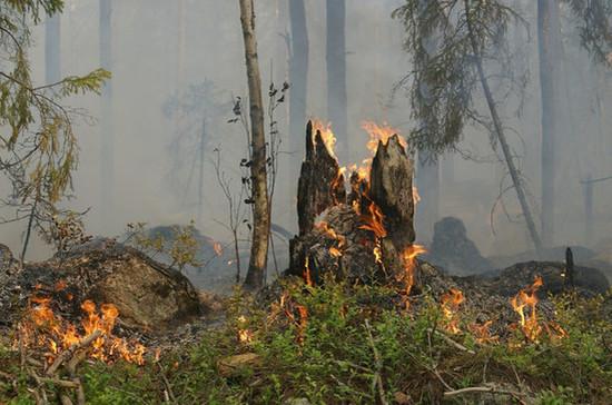 Штрафы за нарушение пожарной безопасности в лесах предлагают увеличить
