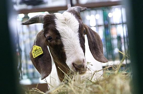 Для регистрации кормовых добавок введут госпошлину