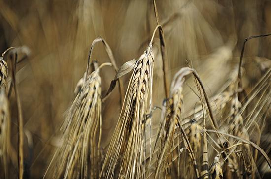 Урожай фермеров предложили страховать от ЧС