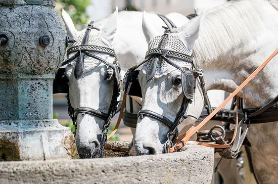 Лошадей хотят изгнать из центра Петербурга
