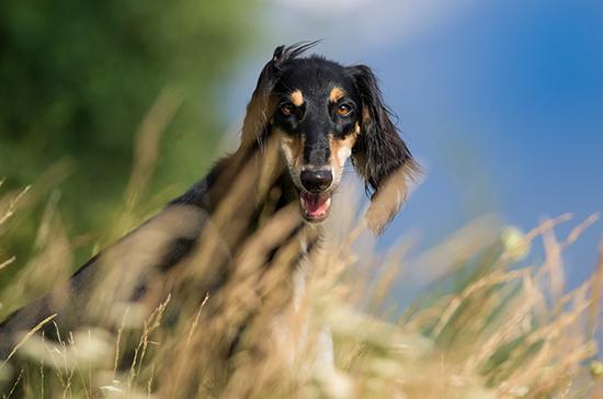 В Курской области могут появиться зоны для тренировок охотничьих собак