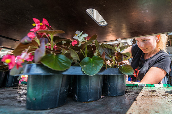 Флорист рассказал, как продлить жизнь цветов