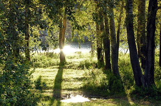 В 2020 году провели лесовосстановительных работ на площади 1,17 млн га