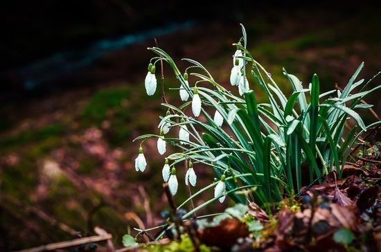 Синоптики спрогнозировали приход настоящей весны