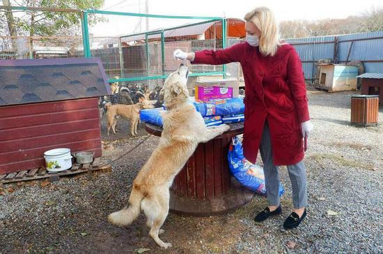 Тимофеева: в споре о судьбе бездомных животных нельзя играть на эмоциях