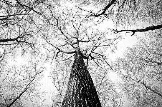 Российский лес не отдадут в частные руки