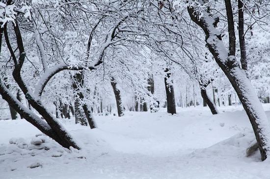 Вырубленный лес предложили компенсировать посадкой деревьев в городах