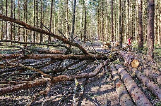И в лес, и по дрова…