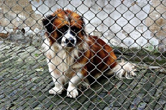 Требования к размещению приютов для животных предлагают смягчить