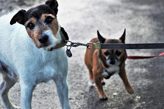 Башкин предложил «серьёзно» штрафовать хозяев выброшенных на улицу собак и кошек