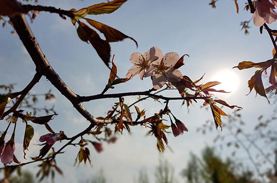 Синоптик рассказал, когда в Москву придёт весна