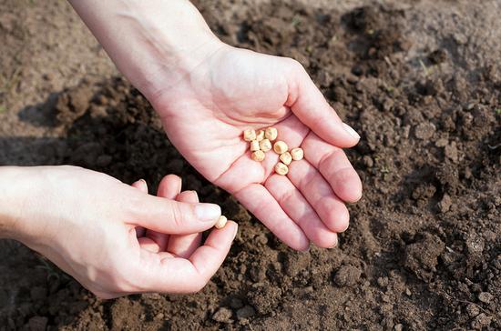 У семян могут появиться «именные» удостоверения