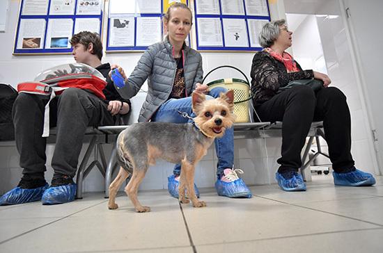 В Госдуме предложили разрешить лечение животных препаратами для людей