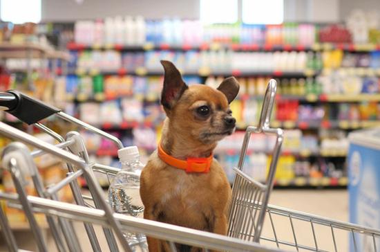 Собак и кошек хотят запретить сажать в магазинные тележки