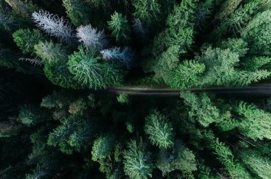 Кабмин обозначил контуры реформы лесоустройства в России