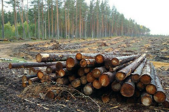 На восстановление лесов бизнесу предлагается дать три года