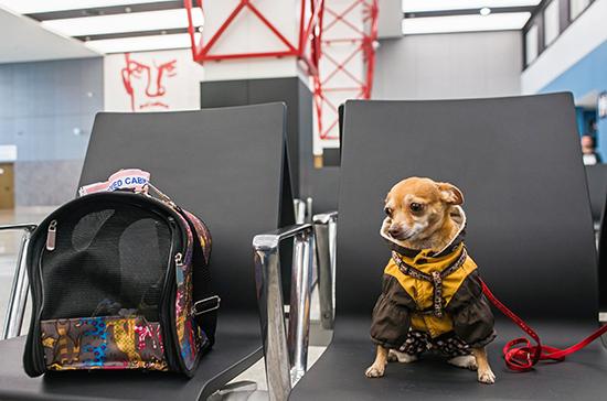В Госдуму внесли законопроект о правилах посещения общественных мест с животными