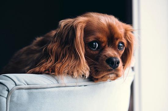 В России могут ввести запрет на изъятие домашних животных за долги
