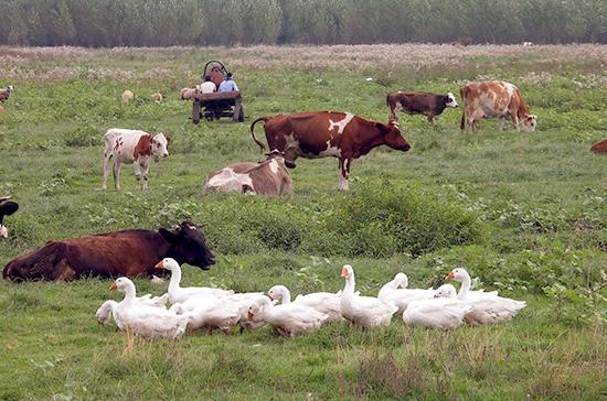 Депутат предложил бесплатно выдавать корма семейным животноводческим фермам