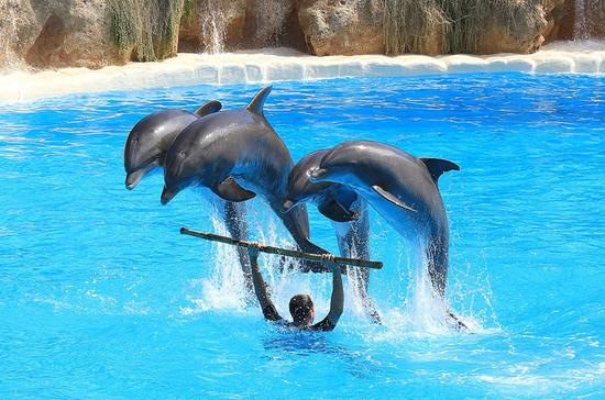 В Госдуму внесён проект о запрете вылова животных для дельфинариев