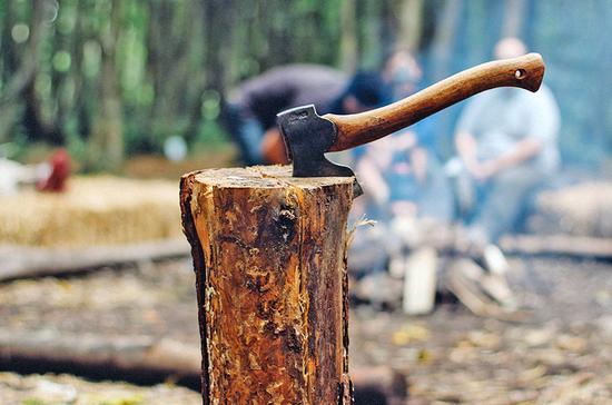 СМИ: используемое для незаконной заготовки древесины оборудование будут конфисковывать
