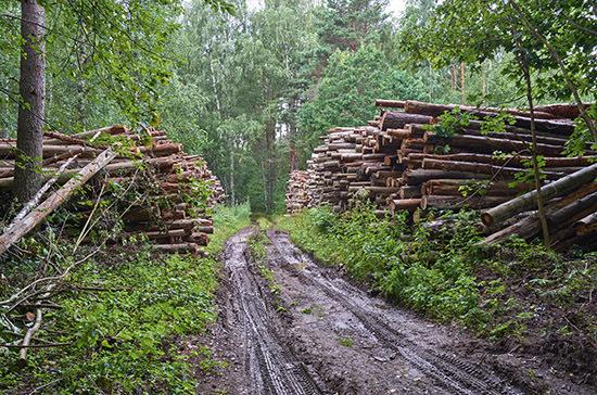 Компенсировать вырубку лесов предлагают за три года