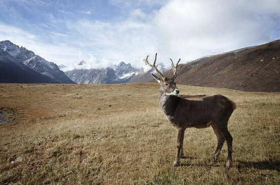 Россиянам предложат получить «арктический гектар»