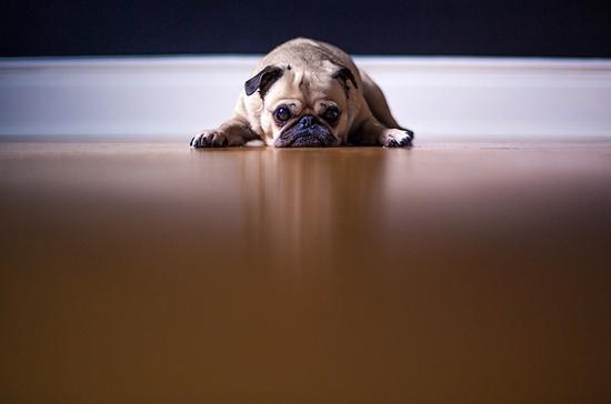 Количество собак и кошек в квартире предлагают ограничить
