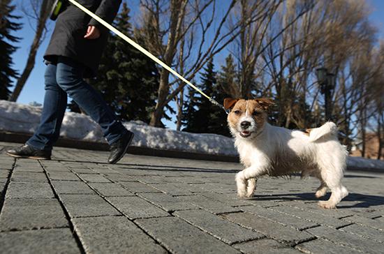 В России начали выпускать вакцину от коронавируса для животных