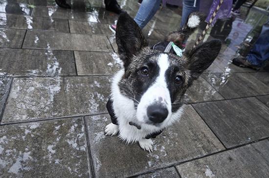 Судебным приставам запретили изымать домашних животных за долги