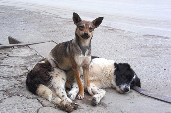 Бездомных собак и кошек предлагают селить в нежилых помещениях