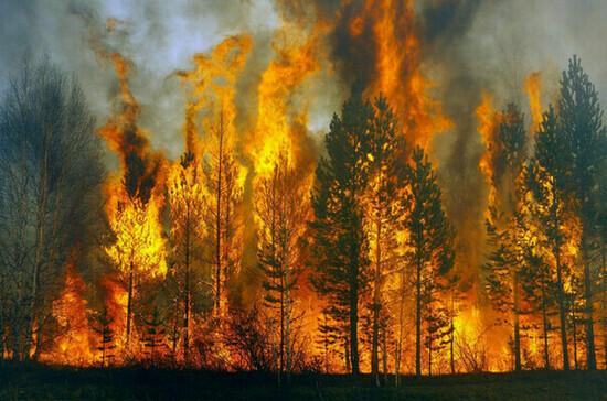 Три гектара леса горят в нацпарке «Хвалынский»