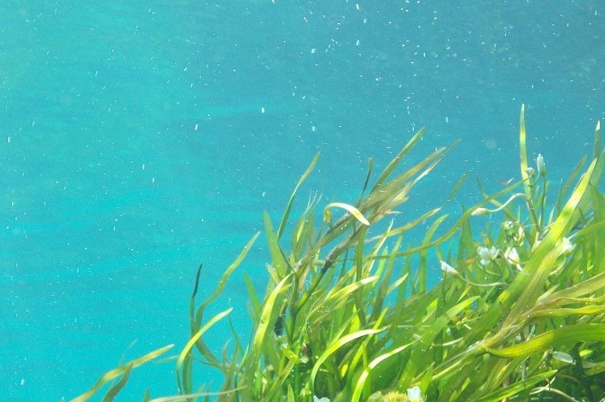 Климат хотят охладить с помощью водорослей
