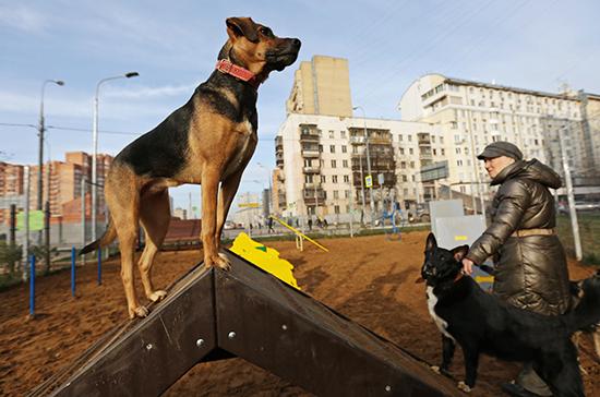В России хотят ввести штрафы за ненадлежащее содержание животных в приютах