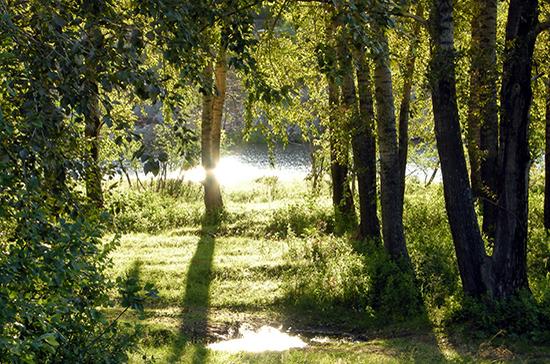 На компенсационное восстановление лесов хотят дать три года