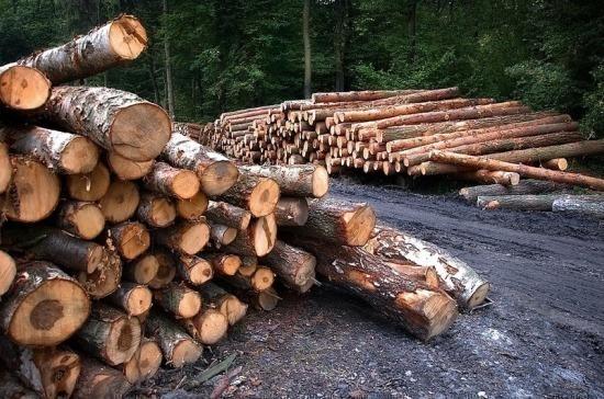 Госдума приняла в первом чтении проект о биржевой торговле древесиной