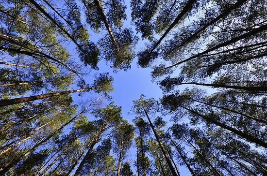 Деревья в лесу предложили считать по новым правилам