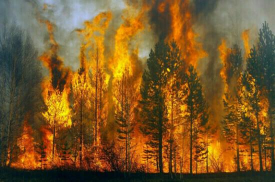 В Иркутской области ввели особый противопожарный режим