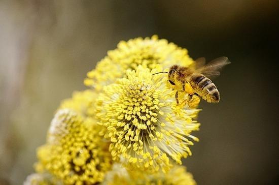 Комитет Совфеда поддержал льготы для пчеловодов-любителей