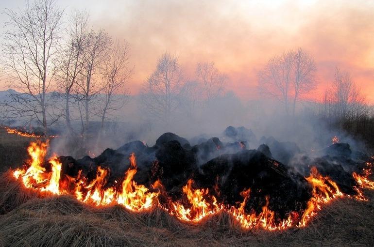 Спасатели объяснили, как защитить дачный участок от огня
