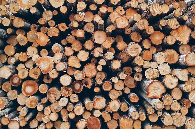 В России вводят пошлины на вывоз некоторых видов древесины