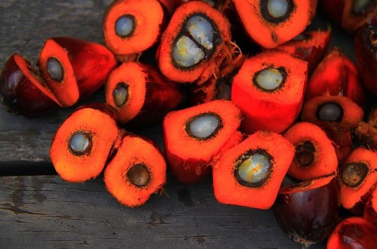Россия значительно увеличила импорт пальмового масла
